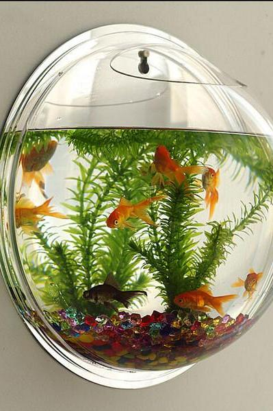Wall-Type Mini-Aquarium Fish Bowl 36049IF